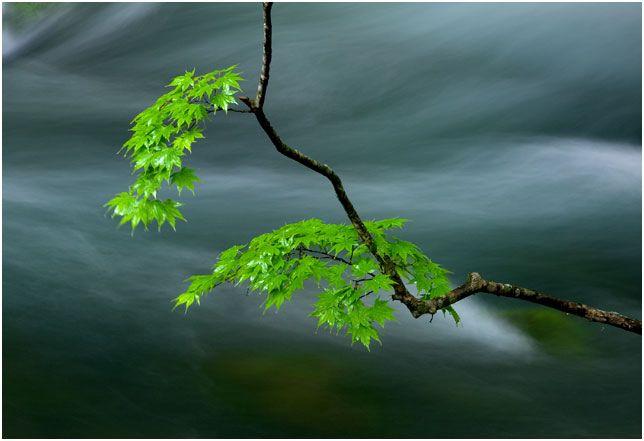 Stream & Leaves
