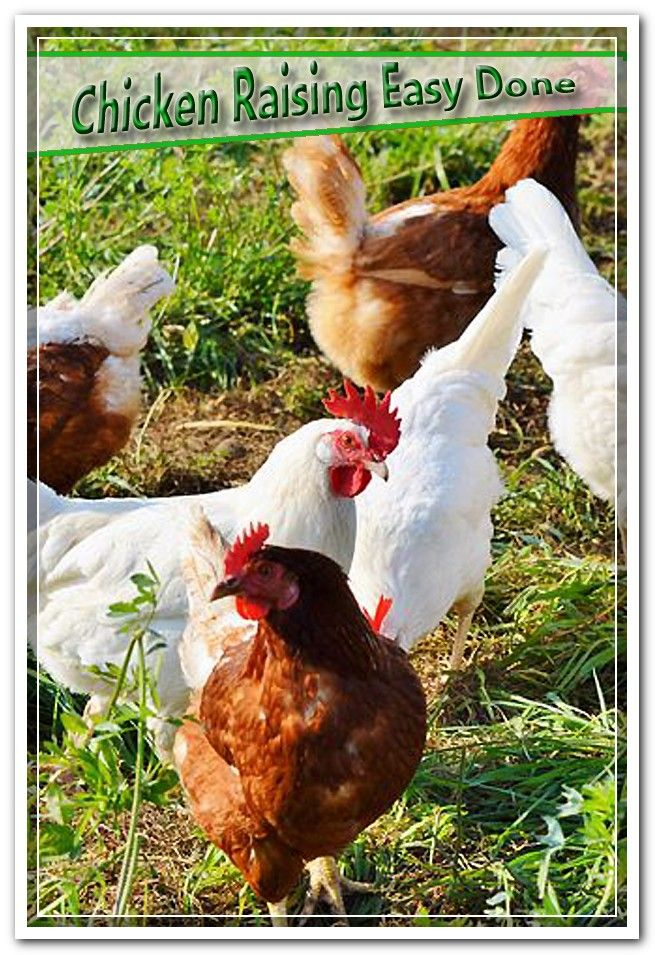 Poultry Care and also Poultry Housing Program. Overview to ...