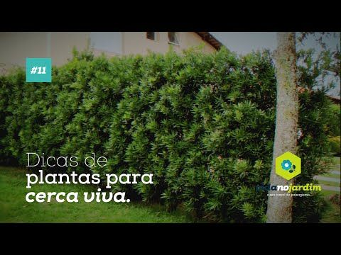 Dicas De Plantas Para Cerca Viva #11   YouTube