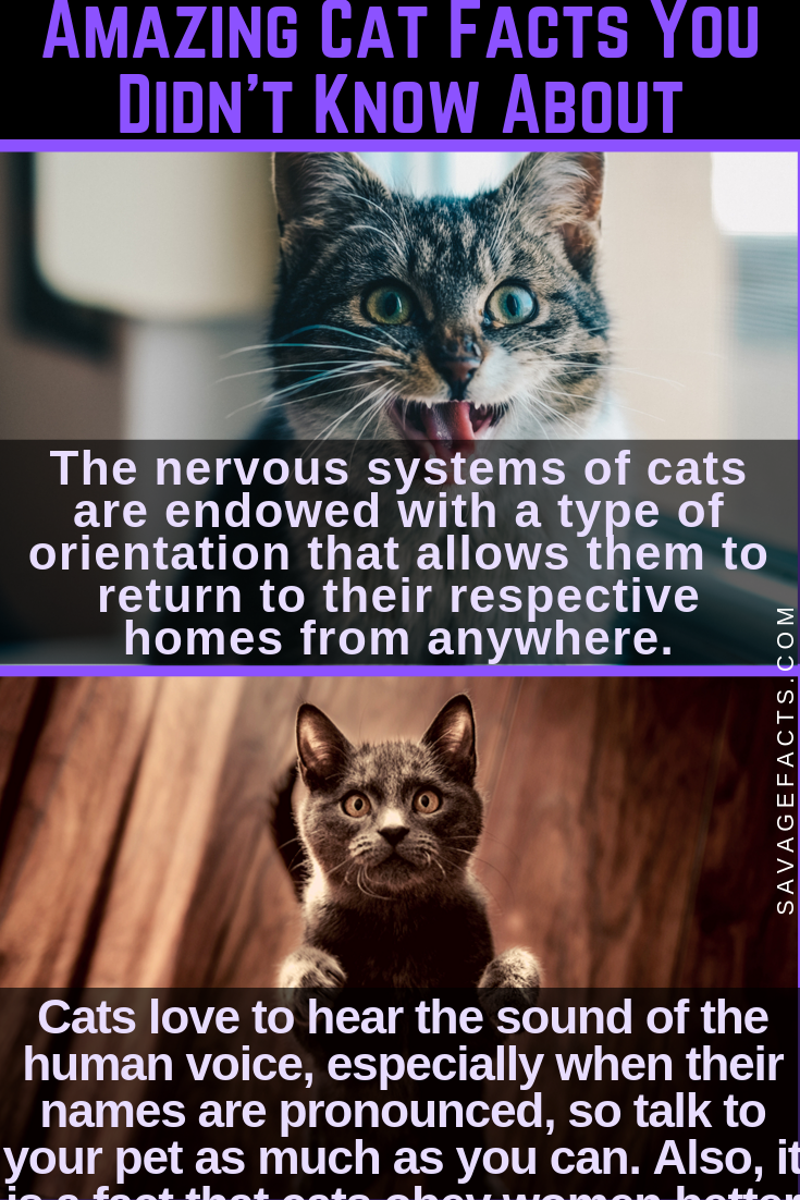 Amazing Facts About Cats That You Didn't Know Cat facts