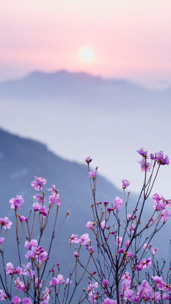 розовый херб завод цветок справочная информация