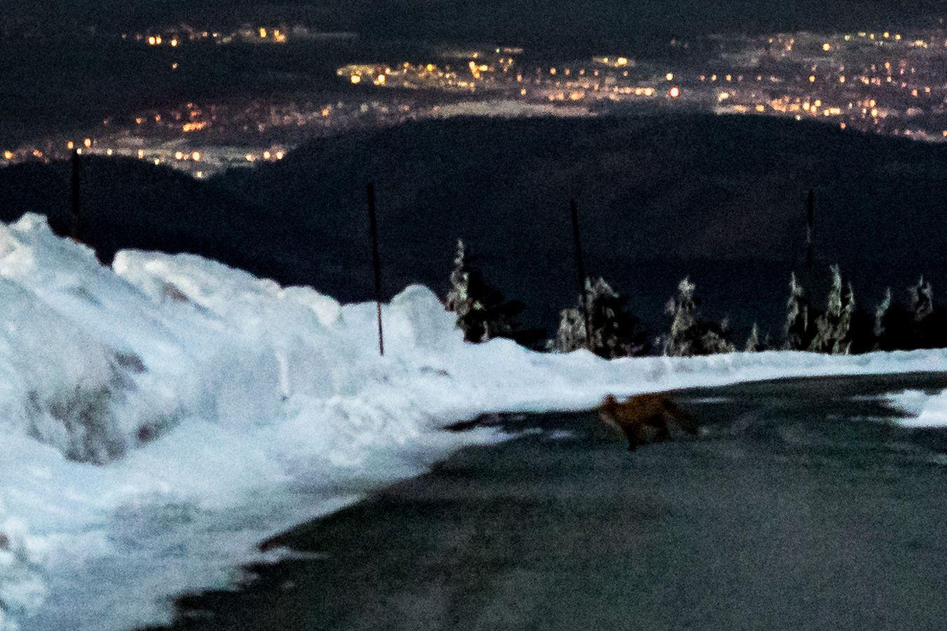 Das hier dürfte wohl das verrauschteste Foto überhaupt sein was ich von diesem Ausflug präsentiere. Dennoch hielt ich es für notwendig. Beachtet bitte unten rechts auf der Straße diesen flinken Besucher. Ich tippe mal auf den Brockenfuchs. Den wollte ich euch nicht vorenthalten. . . . . . . .  #olympus #olympusomd #em1 #olympuscamera #microfourthirds #harz #germany #travel #wanderlust #brocken #snow #harzmountains #neverstopexploring #mountain #hiking #hike #trekking #mountainlife #outdoor…