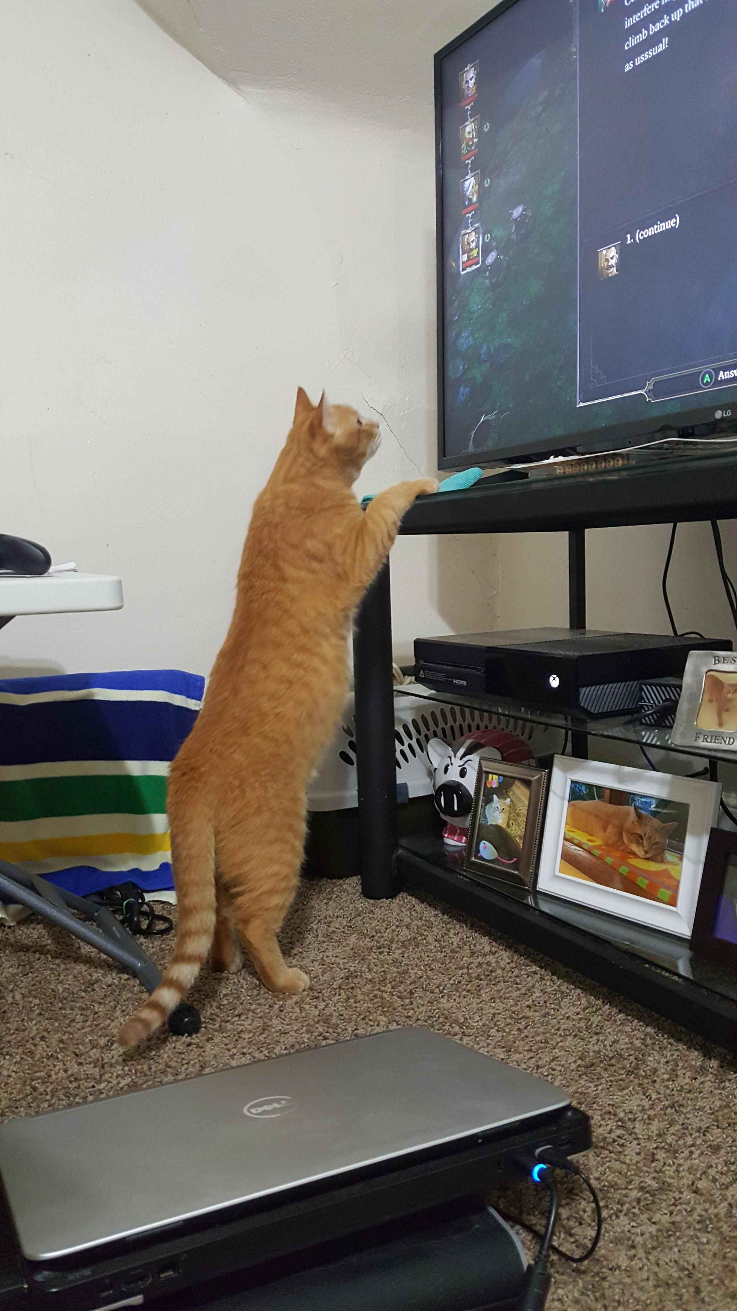 My cat loves watching the mice run around in divinity