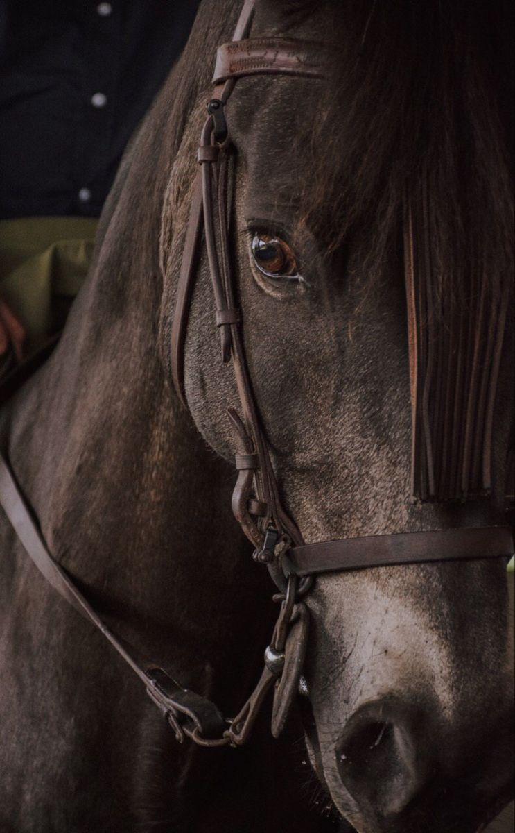 خيل جميل Free Horses Beautiful Horses Horses