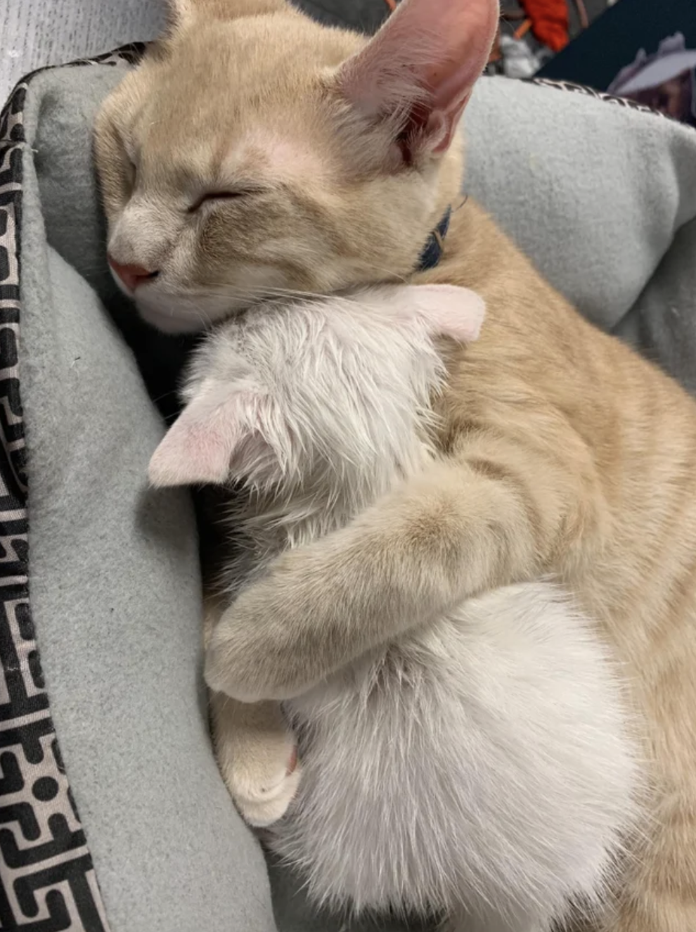 18 Cats Who Just Might Take Your Mind Off How Insane Things Are Right Now In 2020 Cat Cuddle Animals Cute Funny Animals
