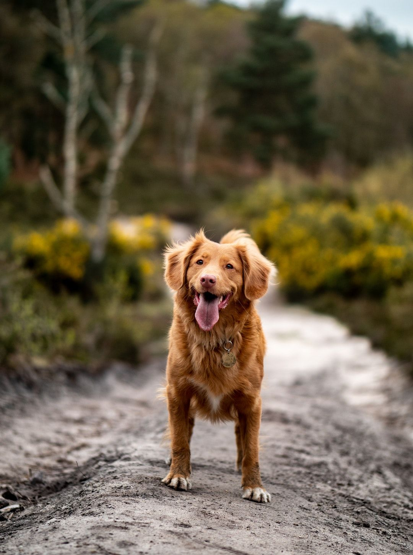 Puppy Training Jacksonville Fl Animal Shelter Old Dog Quotes Whoodle Dog