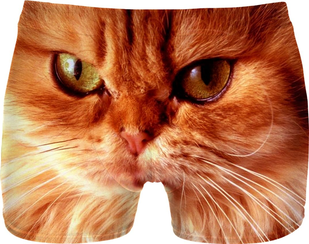 b1e4b32cbae8 Orange Cat Men Underwear | Men Underwear | Orange cats, Cats, Funny ...