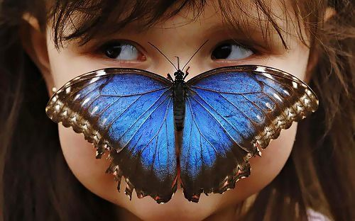 Stella Ferruzola poses with a Blue Morpho butterfly on her nose at the Sensational Butterflies Exhibition at the Natural History Museum in London.