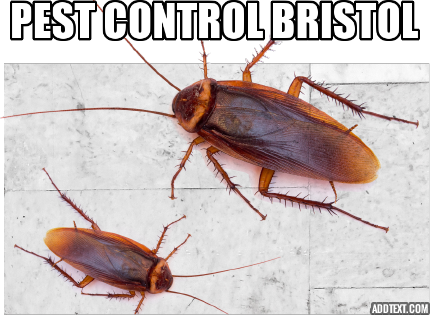 pestcontrolbristol Pest control, Pest removal, Pests