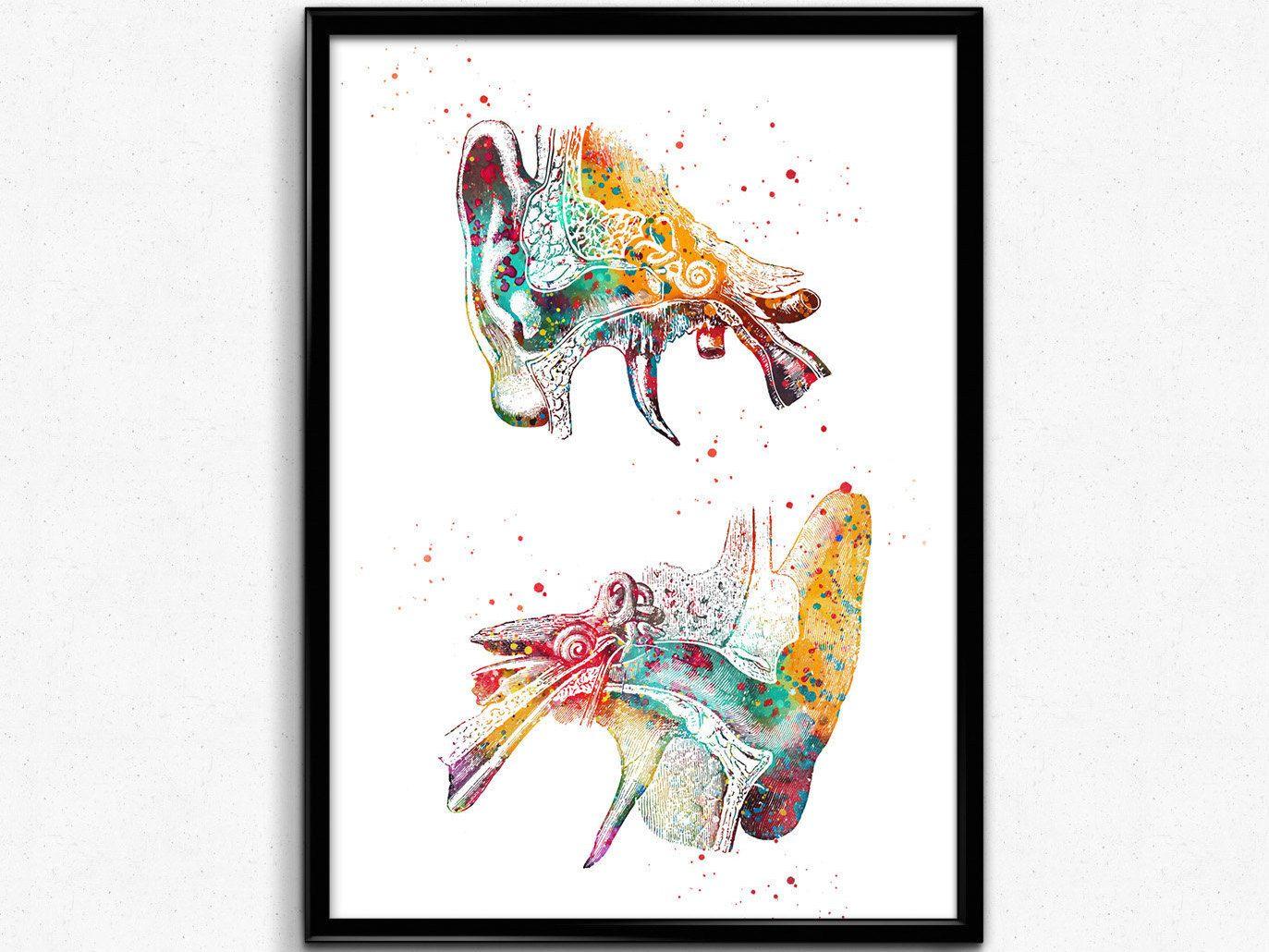 Human Ear Outer Ear Anatomy Watercolor Print Audiology