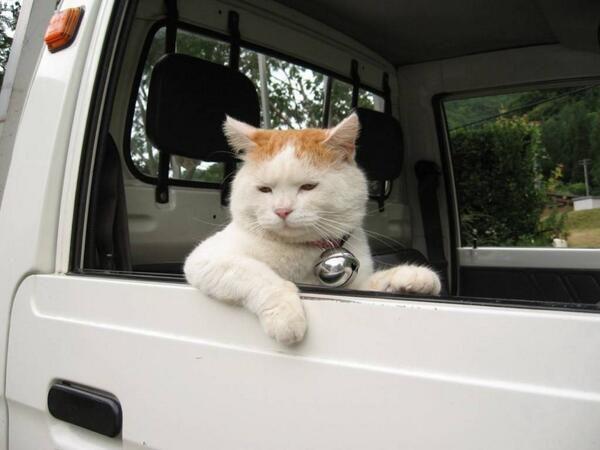 おい!乗ってくか??