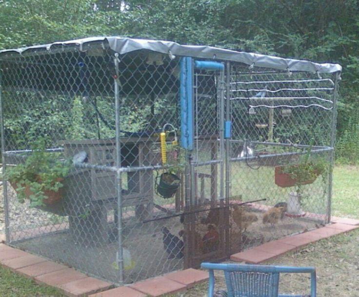 Dog kennel chicken coop. Pots of mint hanging around pen