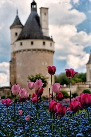 Château de Chenonceau e tulipas no Loire Valley, França por addfavor
