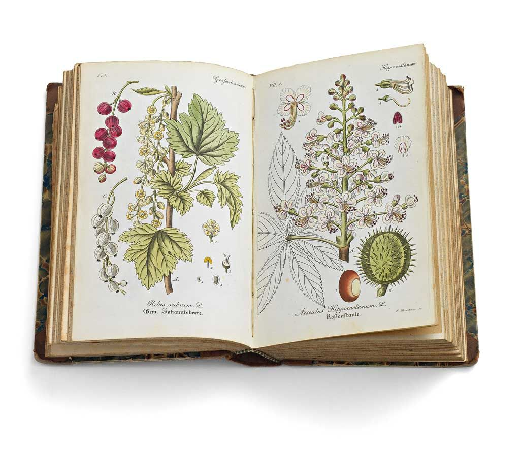 Flora von Thüringen, 1836