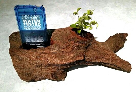 Phone holder, made from old wood and holds a small plant.