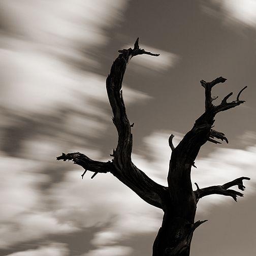 Adrian Davis Photographs - Singular Images 1