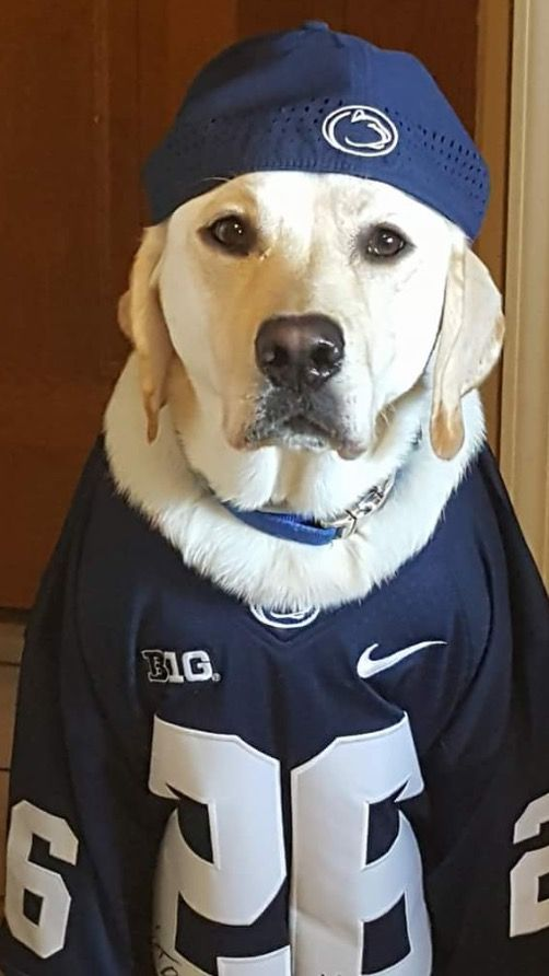A Very Serious Fan O Penn State Nittany Lions Football Penn State Sports Penn State Football
