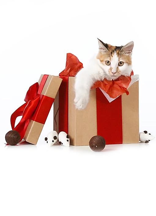 Georgine Saves Blog Archive Good Deal Petsmart 30 Off Online Only Free Shipping Petsmart Grooming Coupons Top Dog Breeds Petsmart