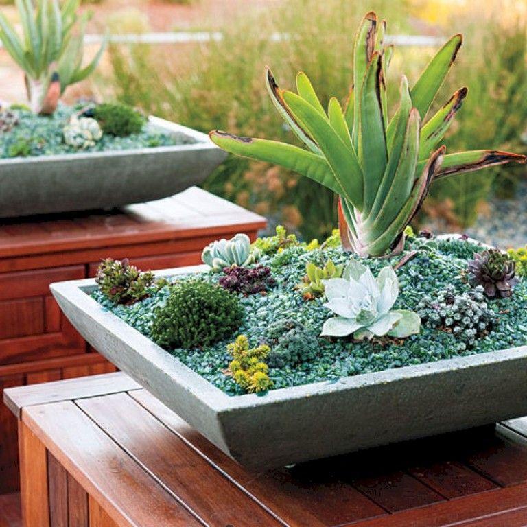 30 Lovely Indoor Succulent Garden Ideas Garden Pinterest