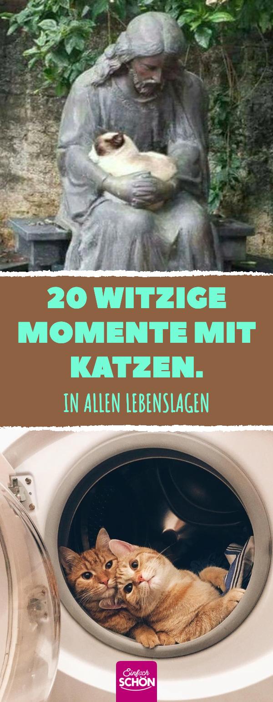 20 witzige Momente mit Katzen, in allen Lebenslagen #tiergeschichten #katze #witzig #lustig #bilder #animalsbeautiful
