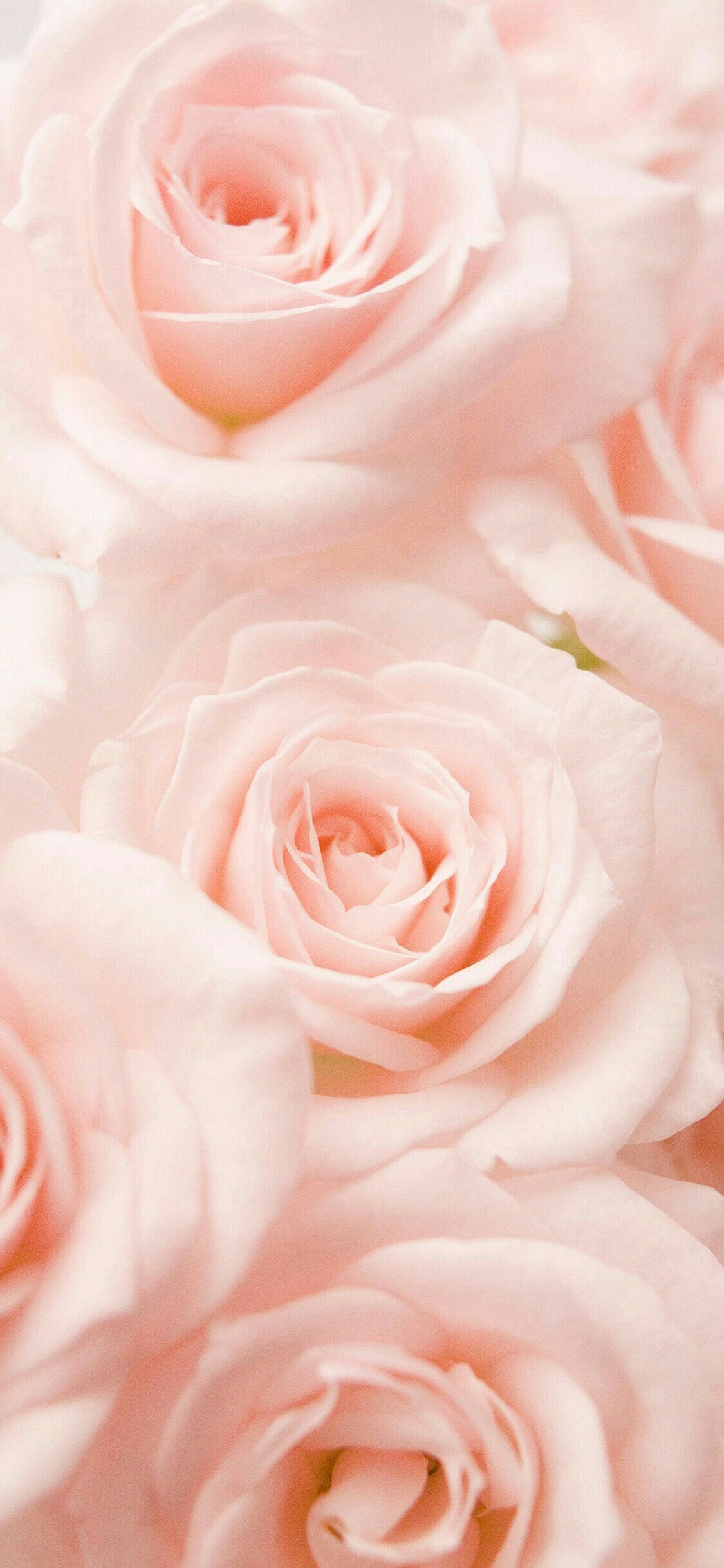 Pin By Laura Gantt On Wallpaper Wallpaper Iphone Roses Rose Flower Wallpaper Flower Iphone Wallpaper