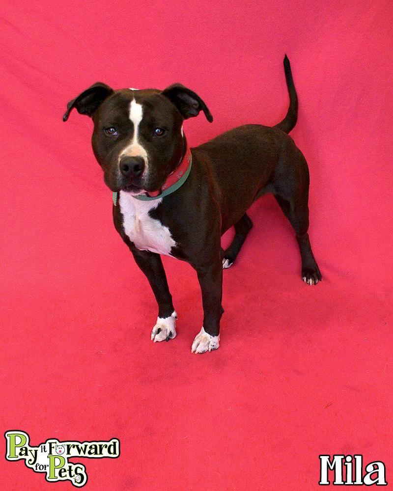 Adopt Mila on Adoption, Animals, Pet adoption