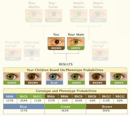 Https I Pinimg Com Originals 29 7b E9 297be95e332196c3793cd413b86eb95a Jpg In 2020 Baby Eye Color Chart Eye Color Chart Eye Color Change