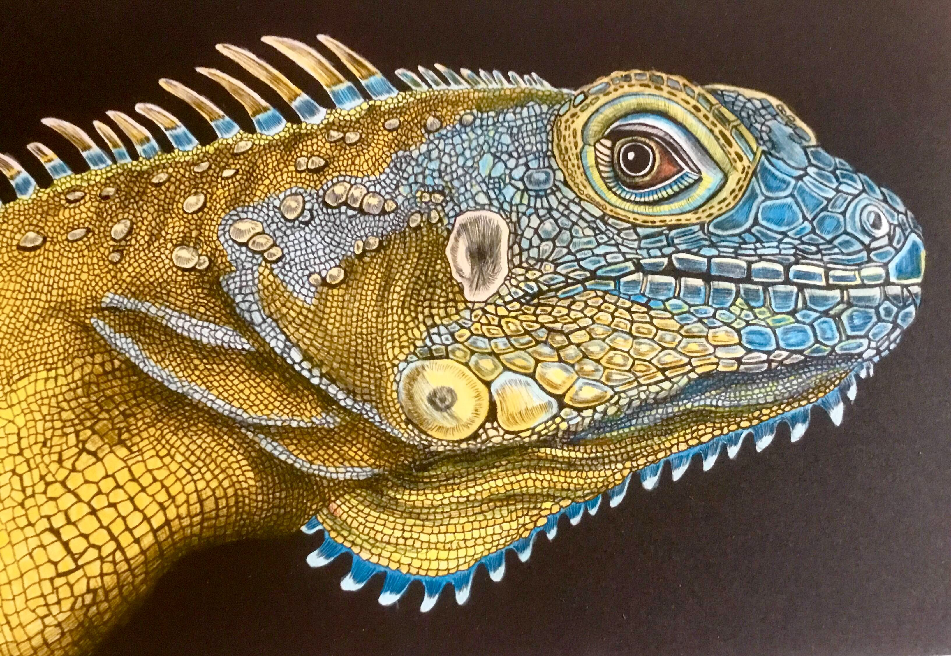 iguana 1 page 19 by jeff m intricate ink animals in detail