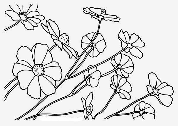 Best Flowers Coloring Pages