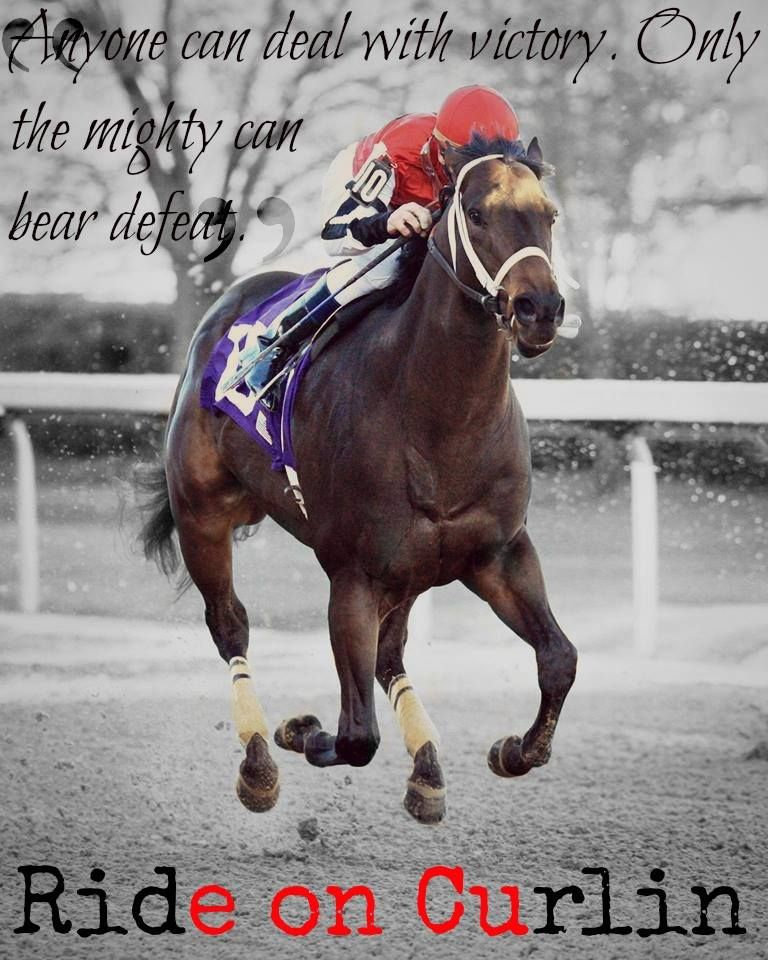 RIDE ON CURLIN Thoroughbred horse racing, Sport horse