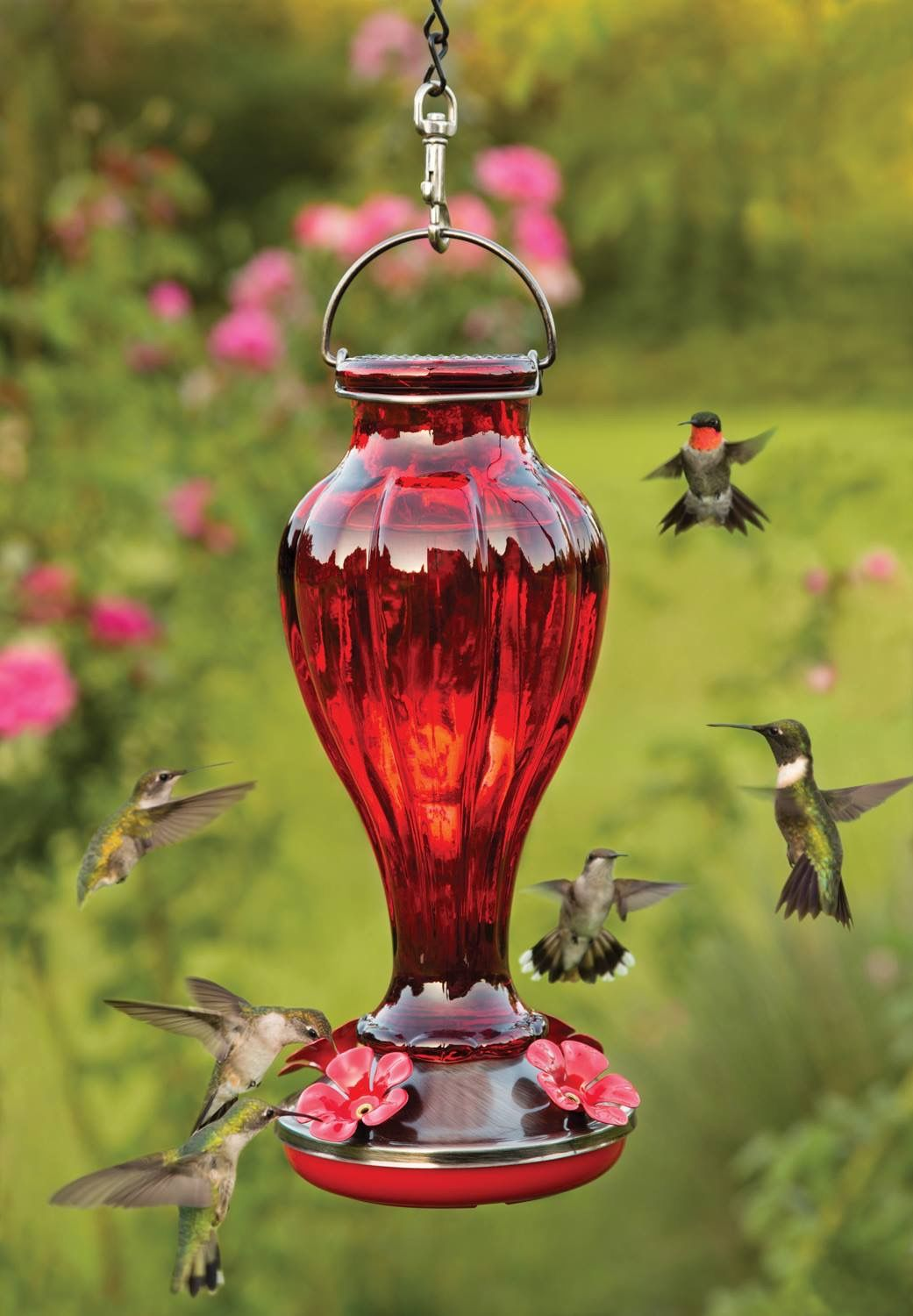 Pin by It Takes Two on Gardens in Color Humming bird