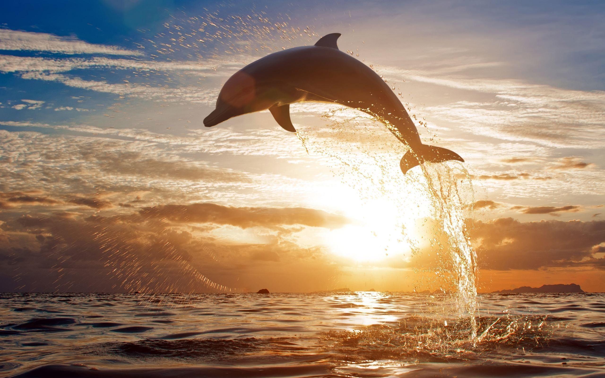 Dolphin Jumping Wallpaper Hd Widescreen Hd Wallpapers Source Ocean Life Ocean Animals Dolphins