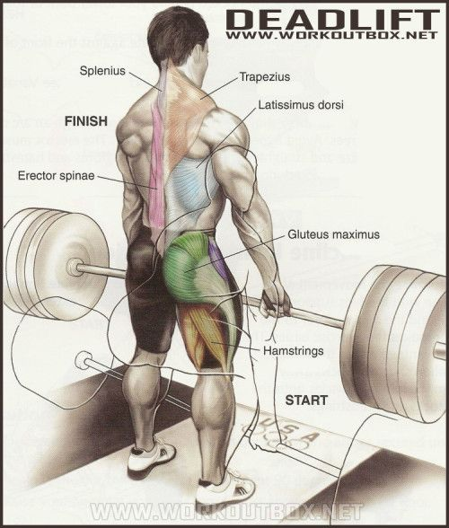 How To Deadlift: The Definitive Guide To Proper Deadlift ...