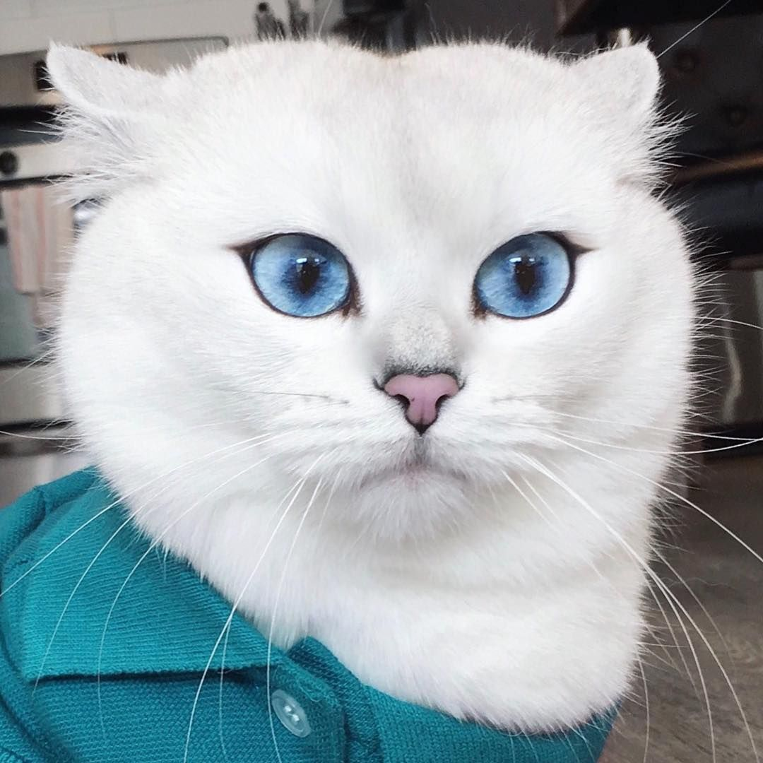 Coby The Cat On Instagram It Takes A Lot Of Licks To Look This Slick Animals Cats Instagram