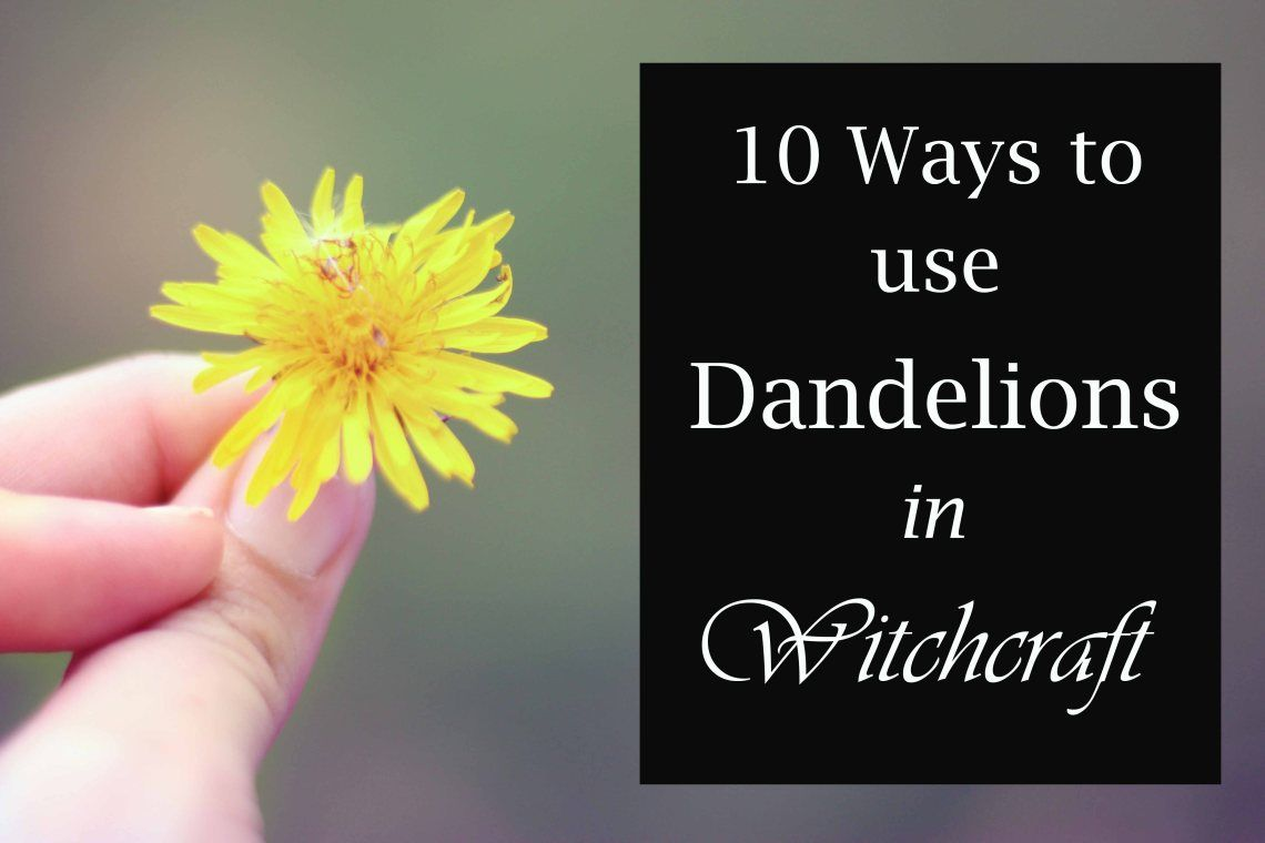10 Ways To Use Dandelions In Witchcraft Moody Moons Witchcraft Herbs Witchcraft Dandelion