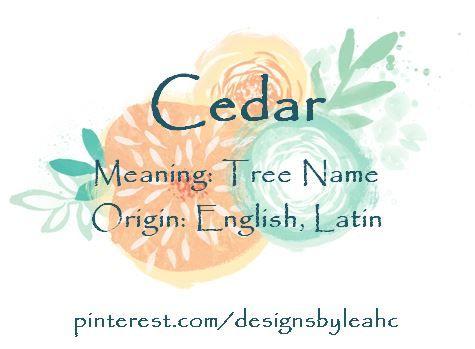 Baby Boy Name Cedar Meaning Tree Origin English Latin