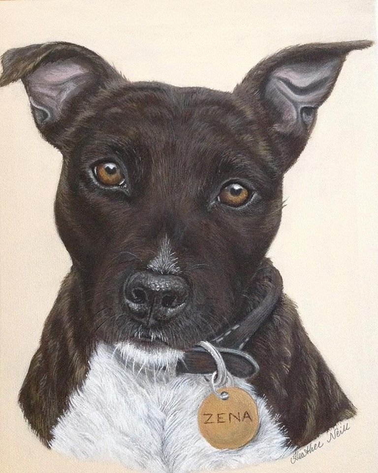 Bull terrier Zena a painting that I did of this beauty who