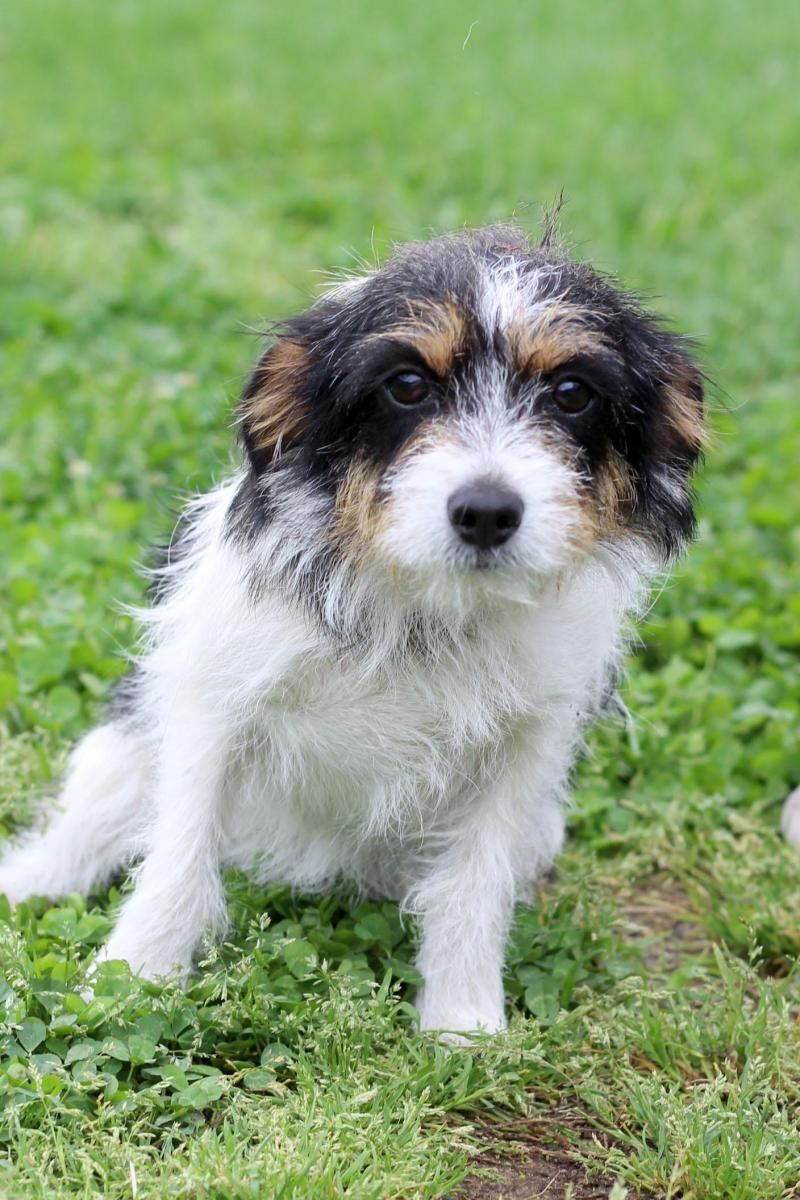 Adopt Kansas 7103 on (With images) Terrier mix dogs