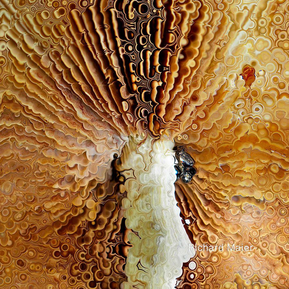 Dissolution 2 by Richard Maier  #art #digitalart #mushrooms #fungi #filterforge #distortion #gills #orange