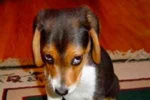 Los Mejores Memes De Cuando Te Reganan Guilty Dog Funny Animal Photos Funny Animal Videos
