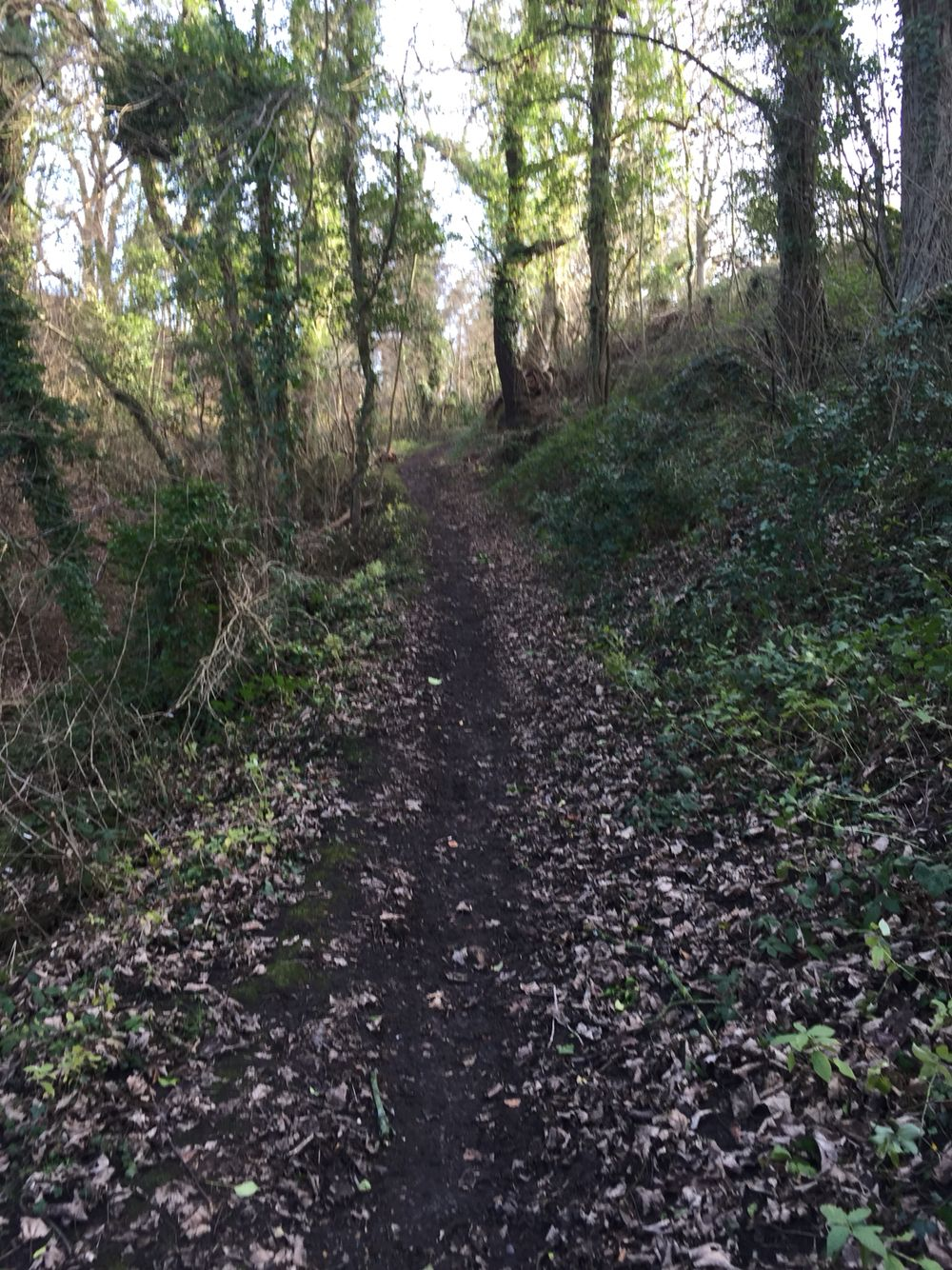 I love a trail run to feel invigorated