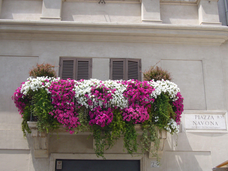 a balcony with flowers, Piazza Navona
