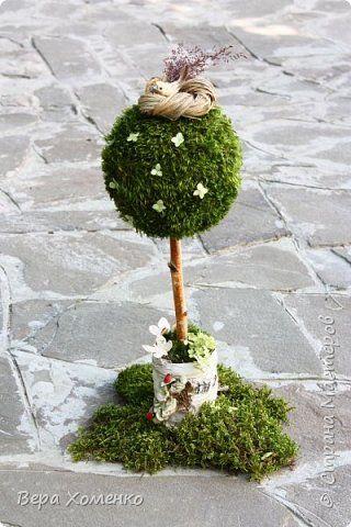 Бонсай топиарий ёлка Моделирование конструирование Весеннее дерево из мха Материал бросовый Материал природный фото 1