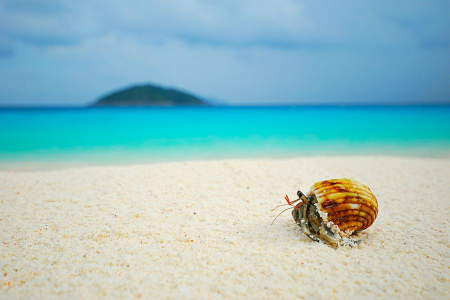 Hermit crab on similan beach by Sakkarin Kamutsri, via ...