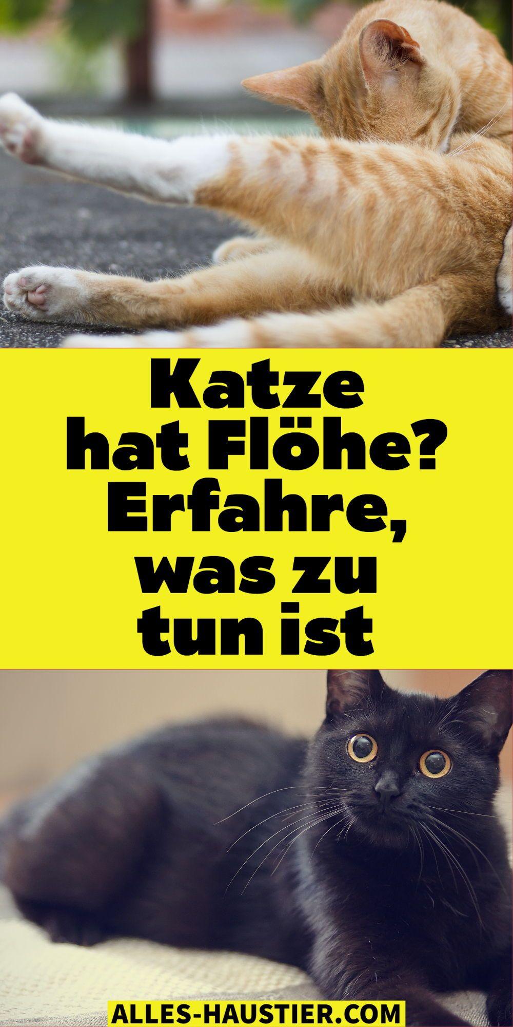 Flohe Bei Katzen Und In Der Wohnung Bekampfen In 2020 Katzen Flohe Katzen Katzenhaltung