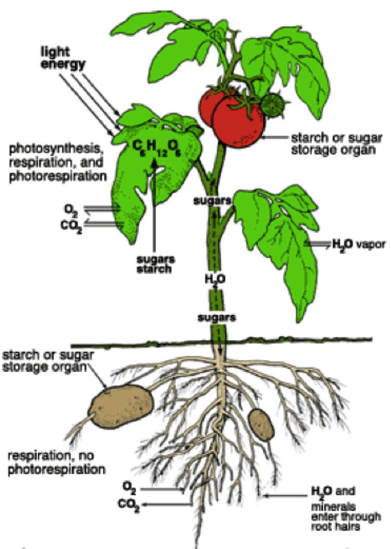 planters respiration
