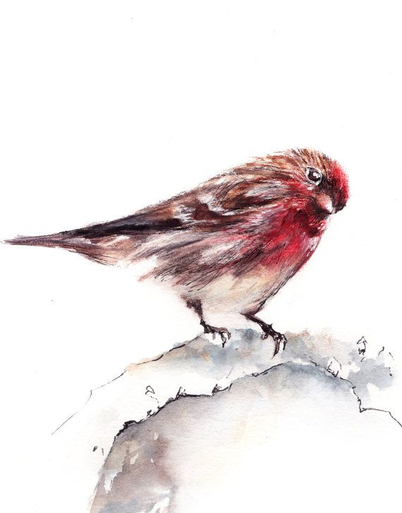 Sparrow Bird Watercolor Painting Art Print, Bird Art