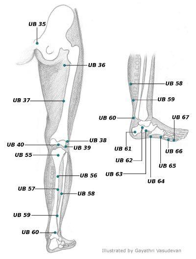 urinary bladder 2..voorbeeld. Op deze site duidelijke ...