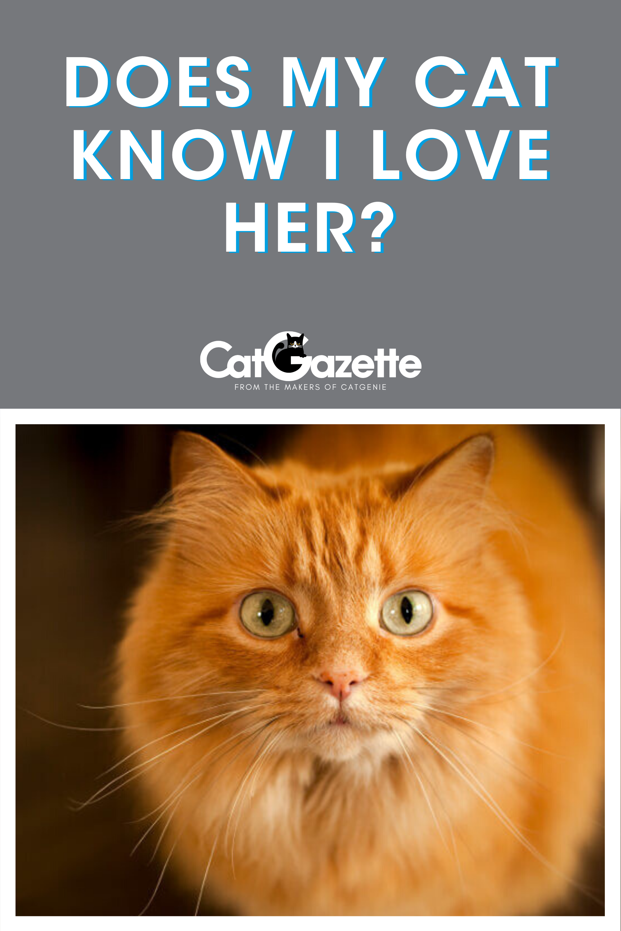 10 Signs Your Cat Truly Loves You Cats Cat Catsofinstagram Of Catstagram Beautifulcats Cats Beautiful Cats Kitten Lover