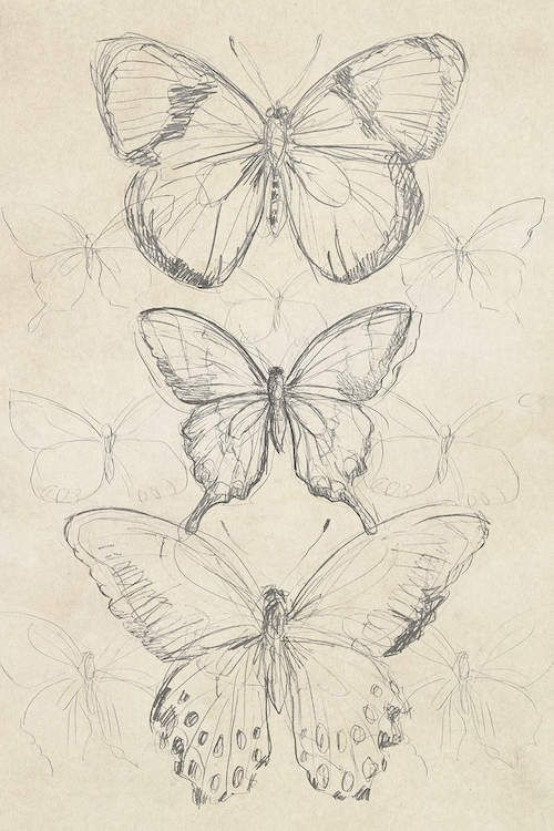 #vintage drawing Vintage Butterfly Sketch I Canvas Artwork by June Erica Vess | iCanvas